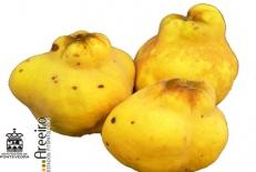 پاورپوینت گیاه شناسی میوه به